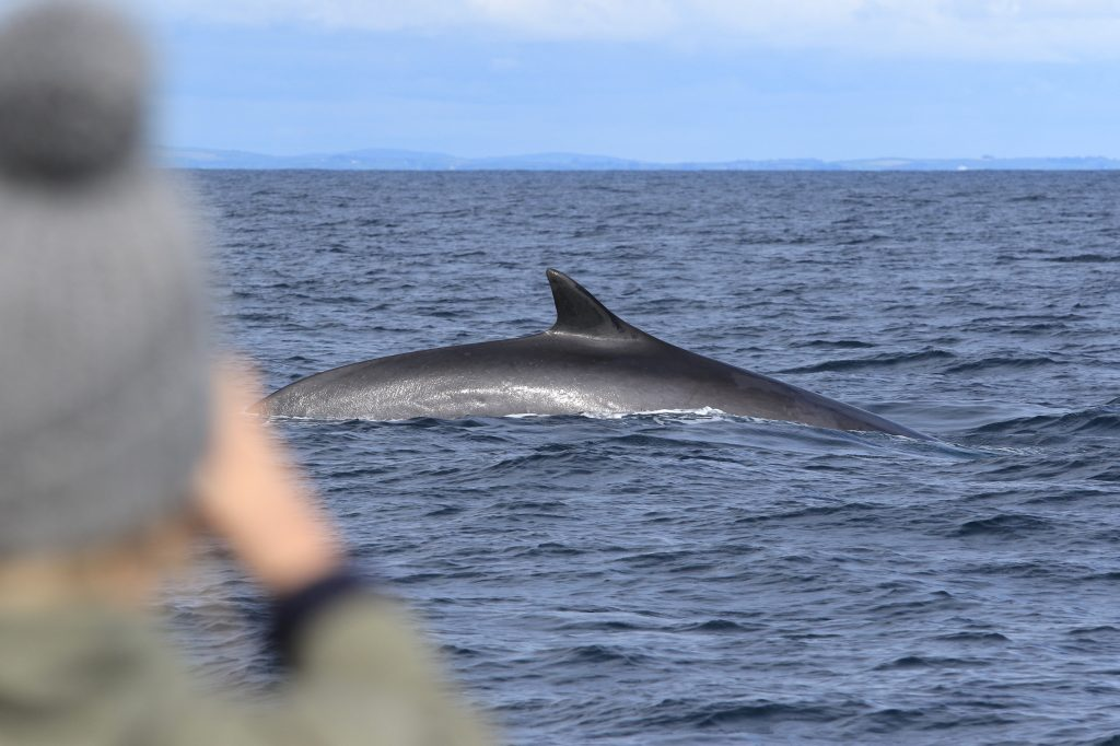 Fin Whale off West Cork